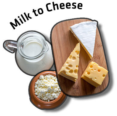 Milk to Cheese